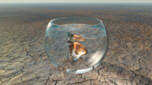 Raising decorative fish in the desert isn't such a far-fetched idea. Photo via Shutterstock.com