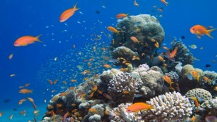 Eilat's coral reefs are among the most heavily used in the world. Photo by Shai Oron/Interuniversity Institute for Marine Sciences