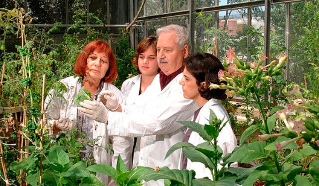 Gepstein and his team in the greenhouse.