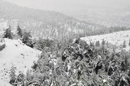 Jerusalem-snow_Chaim-Meiersdorf_268x178