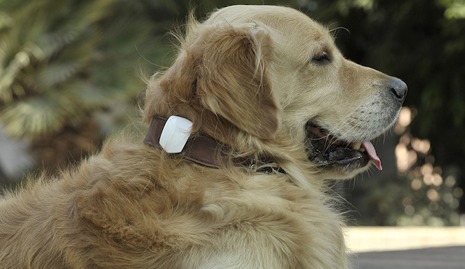 The Chip That Lets You Know If Your Dog