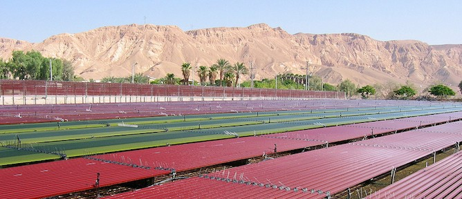 Israel's Algatechnologies mass-produces microalgae in the desert to produce astaxanthin, a powerful and natural antioxidant.