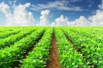 Taking the guesswork out of farming. Image via Shutterstock.com