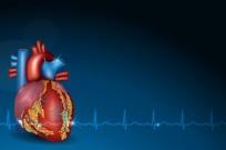 shutterstock cardiovascular