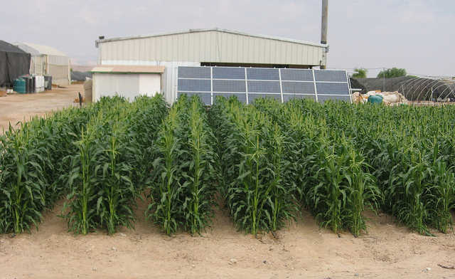 Solar-powered desalination technologies yield a healthy crop at Ben-Gurion University of the Negev.