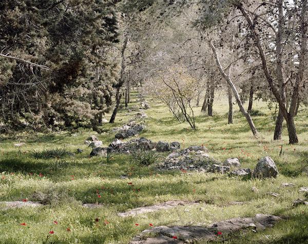 Roei Greenberg_Untitled-Kula-Forest