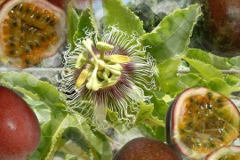 Israeli passion fruit.