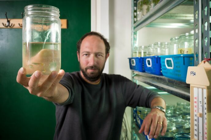 Roi Holzman studies little fish