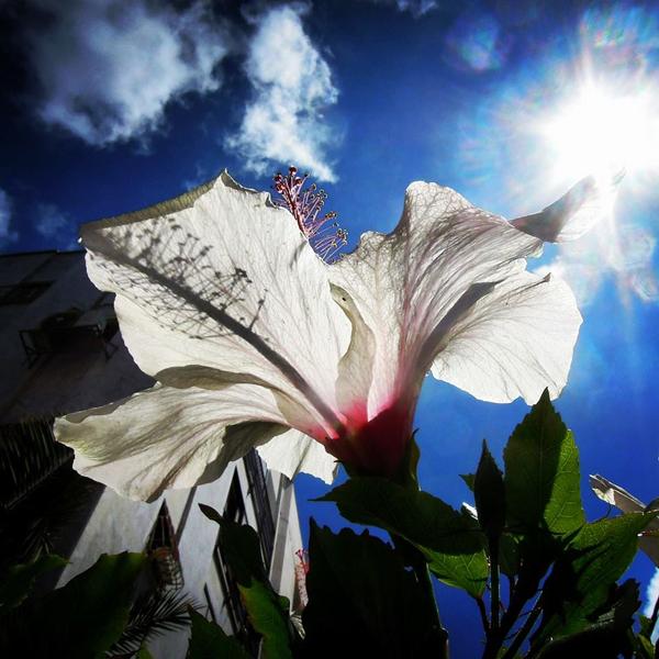 Mario-Troiani_white-flower-white-city
