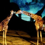 Ramat-Gan-Safari-Magic_268x178