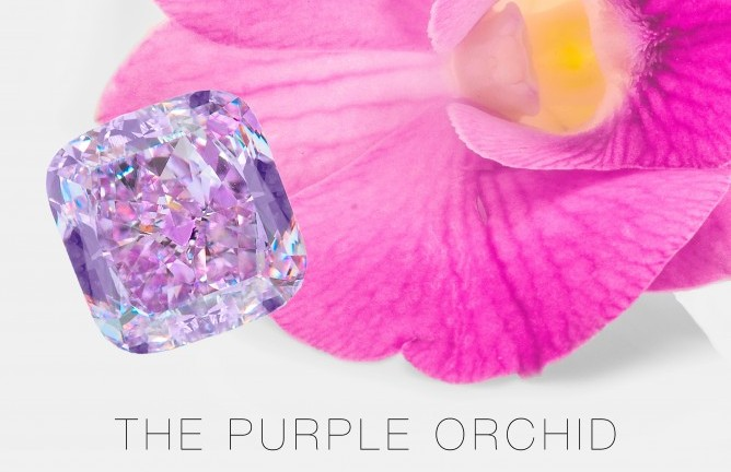 infused orchids pin westerlay collection gemstone phalaenopsis the orchid