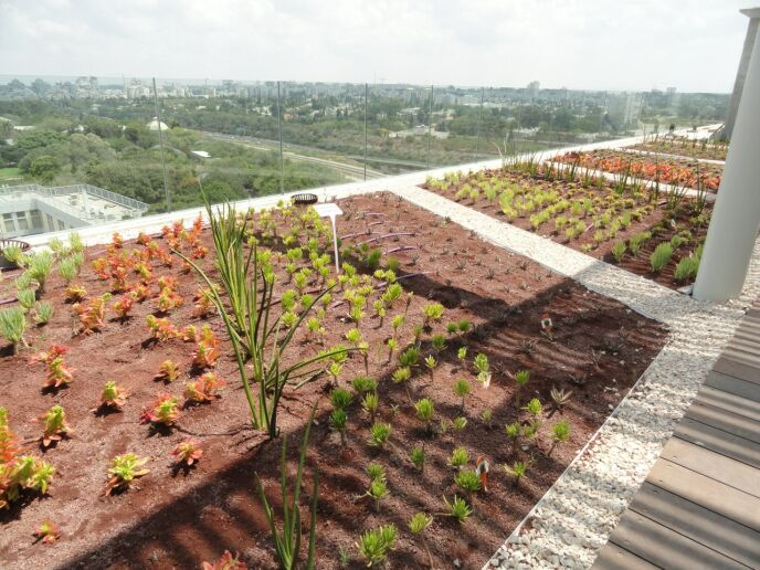Plants on the building's roof were carefully chosen. Photo by Karin Kloosterman