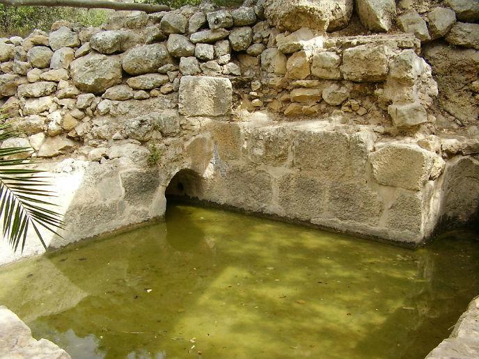 Ein Tamar stream at Aminadav Forest. (Pikiwiki Israel)