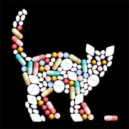 Cats could hold the clue to new anti-HIV drugs. (Shutterstock)