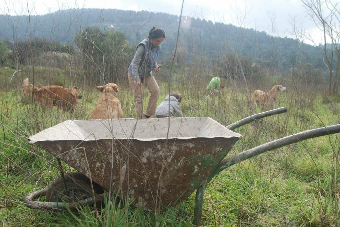 Volunteers cleared the fields before the work began.