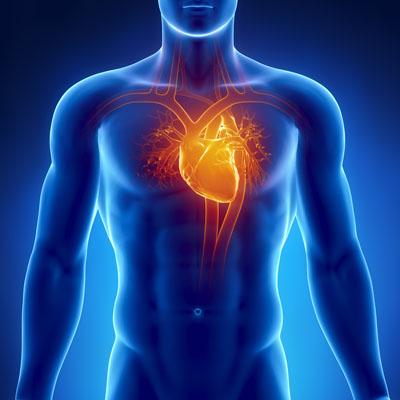 Novel biocompatible cardiac patch comprises  gold nanoparticles. (Shutterstock)