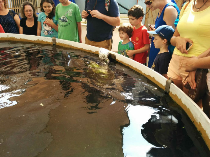Most Saturdays, tours of the sea turtle center are a popular family activity. Photo by Viva Sarah Press