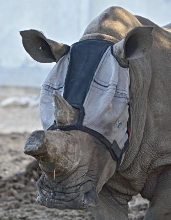 Tanda's vision saving mask. (Tibor Yager/Ramat Gan Safari)