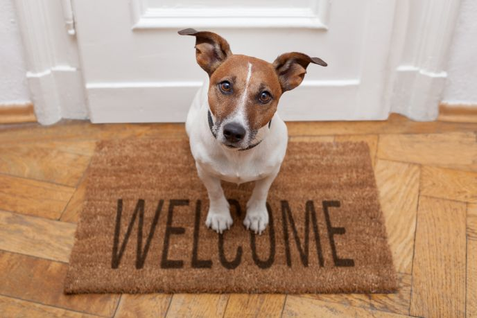 Petbnb helps you find your pet a welcome home away from home while you are on holiday. Photo by www.shutterstock.com
