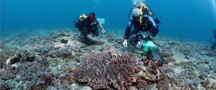 Prof. Benayahu, right, diving for soft corals in Taiwan. Photo by Ming-Shiou Jeng