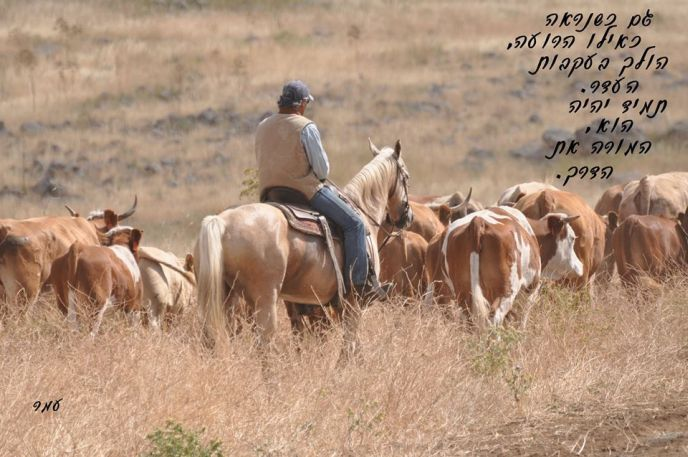 "Retired cowboy Omer Weiner took this photo and added his original poem. Translation: ""Even when the shepherd appears to be following the herd, it is always he who leads the way."""