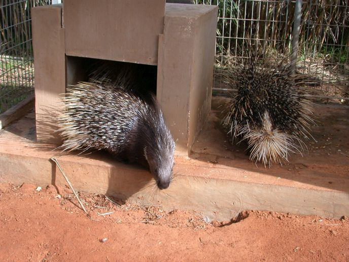 Don't get too close to these prickly creatures.