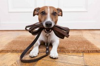 Who says dogs don't enjoy innovation? Photo via www.shutterstock.com