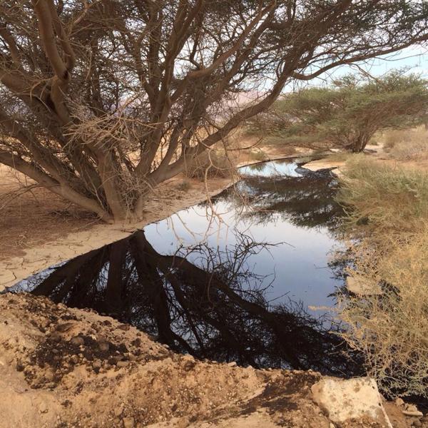 eilat-evrona-oil-spill_1_rotem-dotan