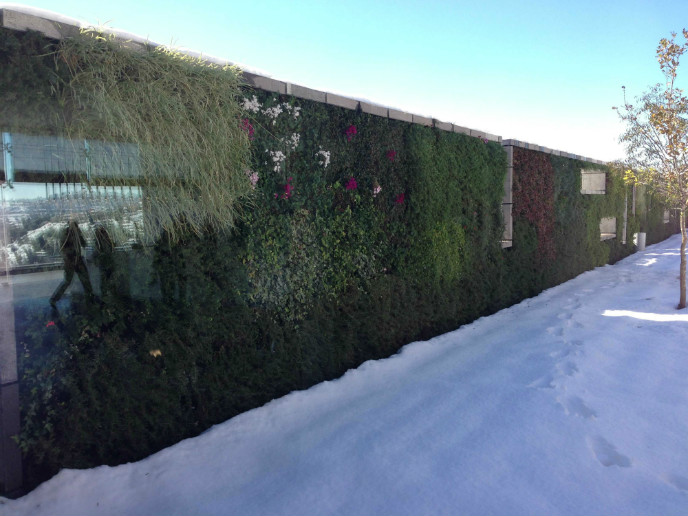 The living walls offer many ecological advantages.