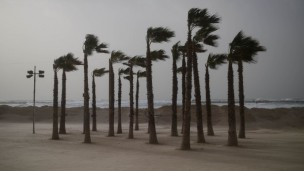 Palm trees on the beach in Tel Aviv on January 6, 2014. Photo by Ben Kelmer/Flash90