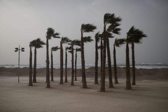 Palm trees on the beach in Tel Aviv on January 6, 2014. Photo by Ben Kelmer/Flash90