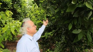 Sandy Colb in one of his orchards. Photo by Amitai Gazit/Ofek-Israel