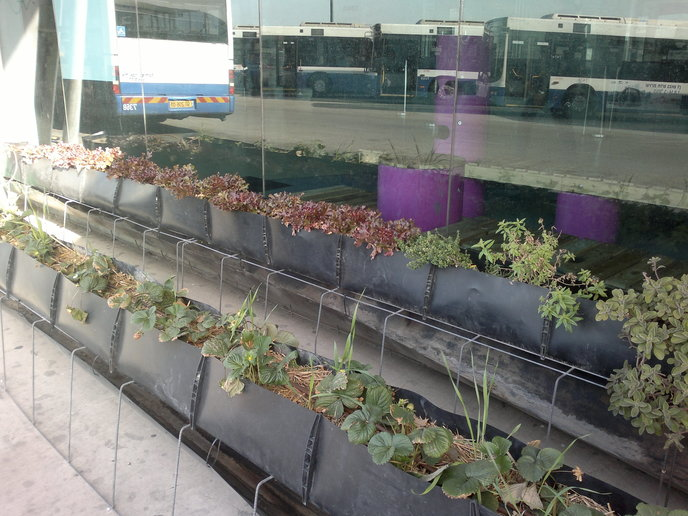Buses reflected in the window next to the outdoor plantings.