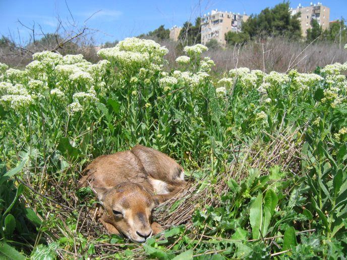 One of the inhabitants of Gazelle Valley. (Photo: Amir Balaban)
