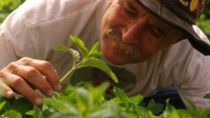 Uri Alon's veggies are his tourist attraction.
