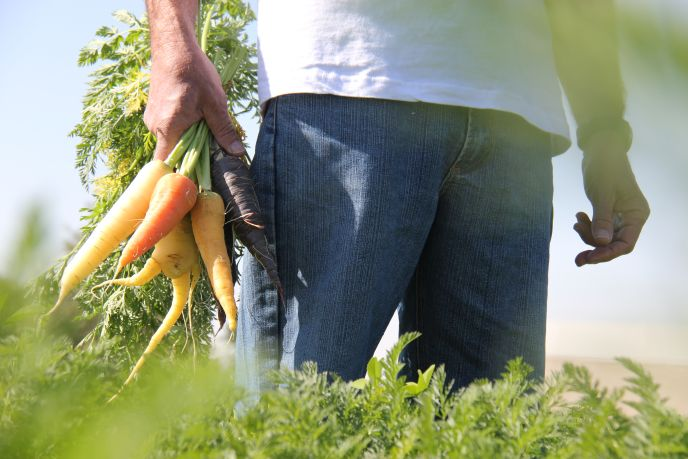 The Salad Trail is much more than pick-your-own produce.