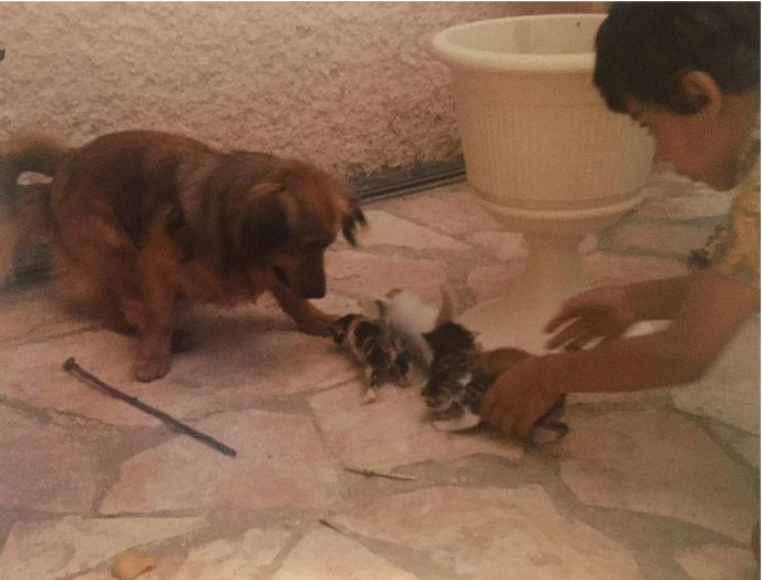 Eldad Hagar in Zichron Ya'akov, about six years old in 1981, introducing his dog to kittens left in a box at the family's door.