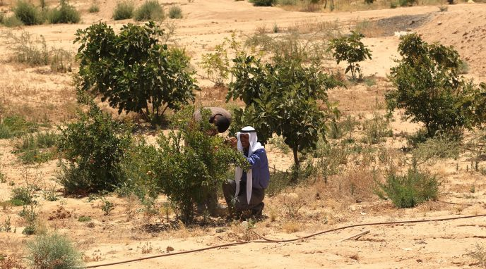 Project Wadi Attir's ecosystem restoration initiative is combatting desertification.