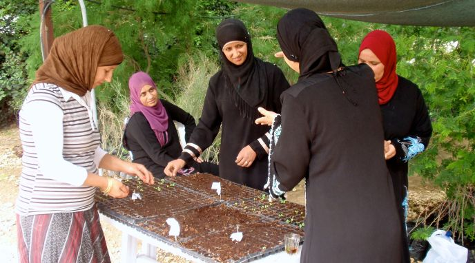 Women in the indigenous vegetable initiative are preserving and documenting traditional Bedouin vegetable cultivation techniques and contributing to better nutrition.