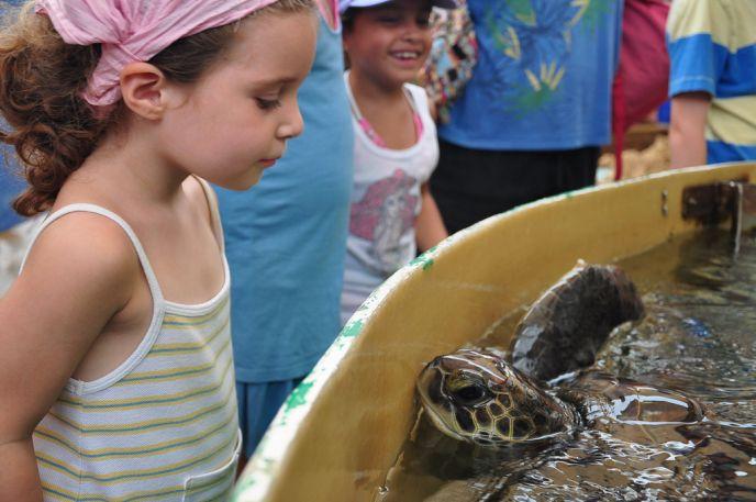 The Sea Turtle Rescue Center in Mishmoret.   Credit: Yaniv Levy