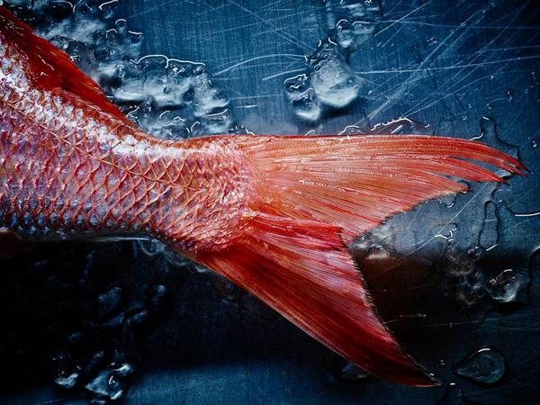 Culinary Doc 2015 - Dan Peretz