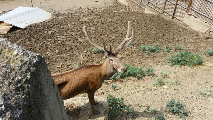 Israeli zookeepers save the animals at Tbilisi Zoo. (Photo: Dr. Nili Avni-Magen)