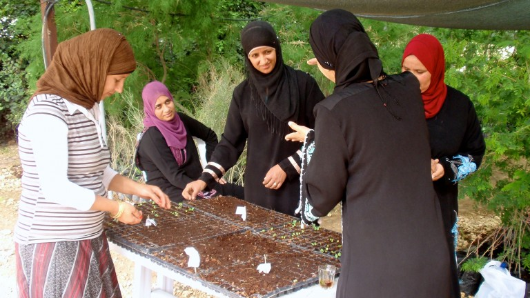 Women in the indigenous vegetable initiative are preserving and documenting traditional Bedouin vegetable cultivation techniques and contributing to better nutrition. Photo: courtesy