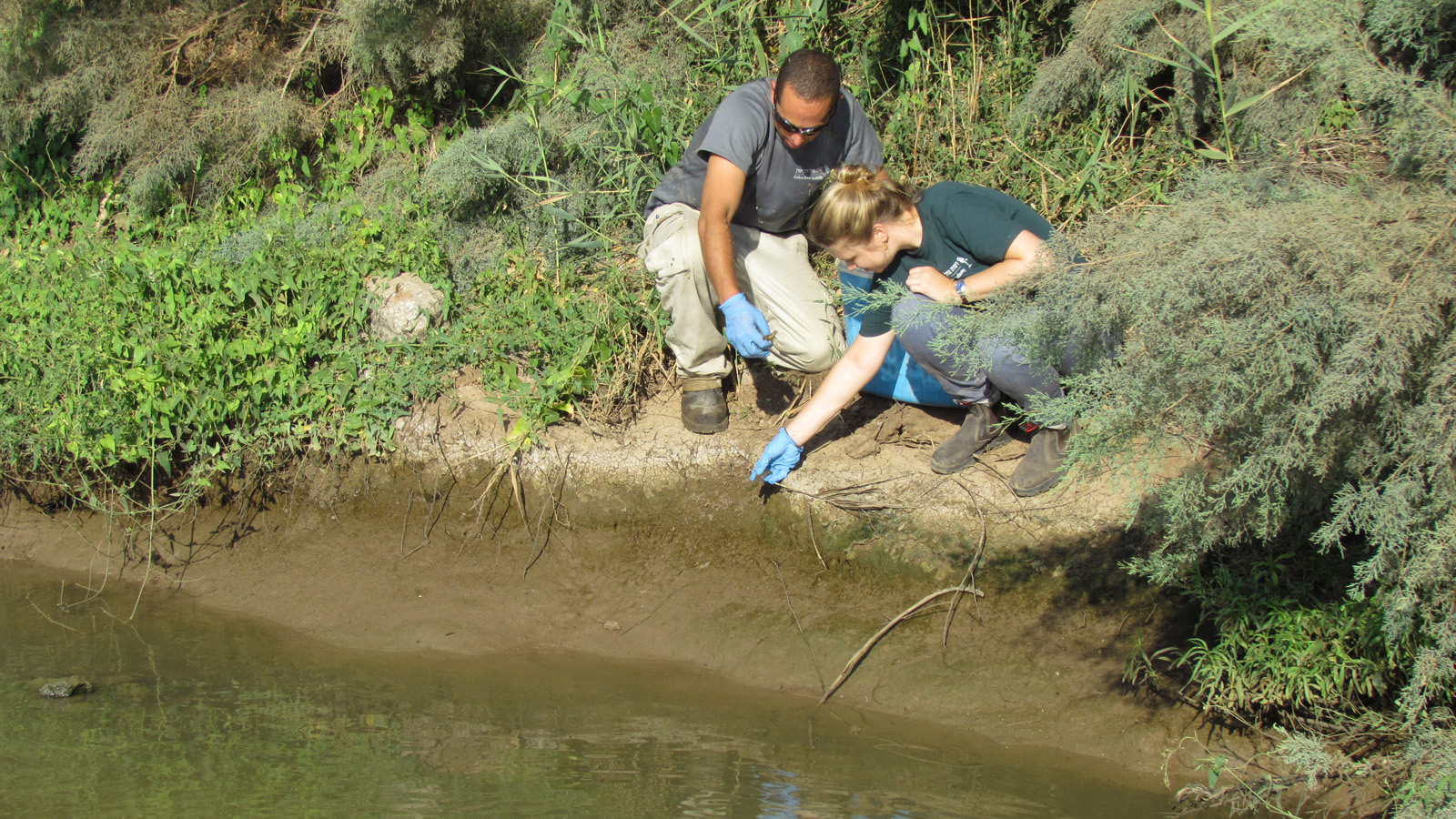 All the turtles are free at the Kishon River. Photo Alon Ben Meir, Kishon River Authority