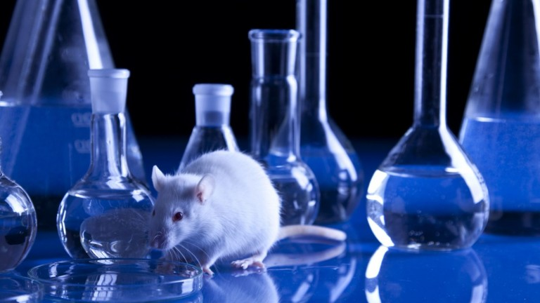 No more lab rats? Image via Shutterstock.com