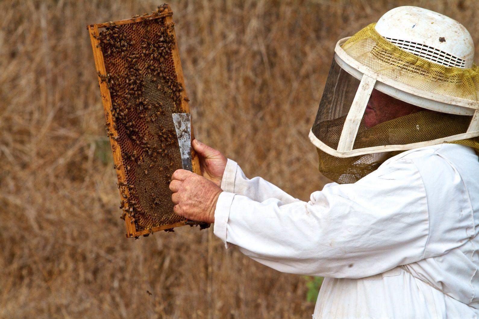 An Israeli beekeeper. Photo by Doron Horowitz/Flash90