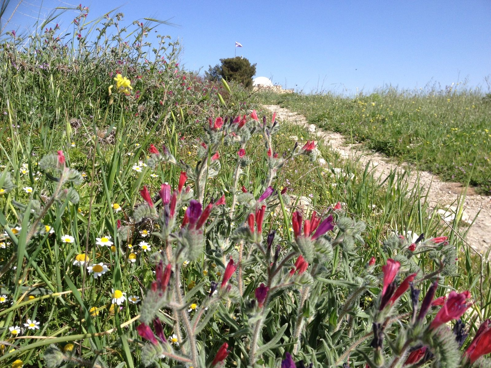Flowers on Bible Hill, photographed by Moriah Gilbert.