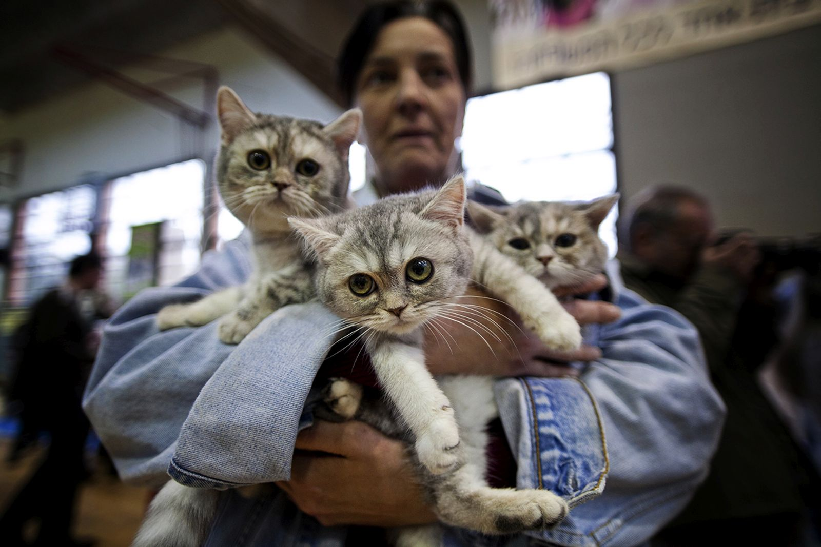 This woman brought her three cats to the 2012 Royal International Exhibition in Holon. Photo by Dima Vazinovich/FLASH90
