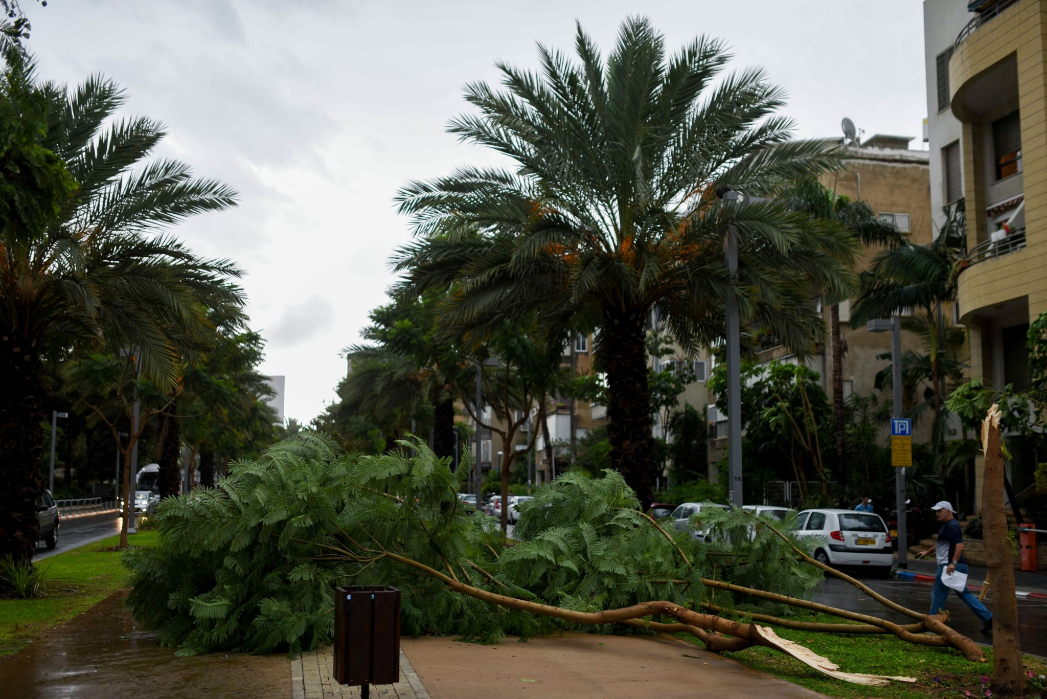 Trees came down due to heavy rain in Tel Aviv, on October 25, 2015. Photo by Ben Kelmer/FLASH90