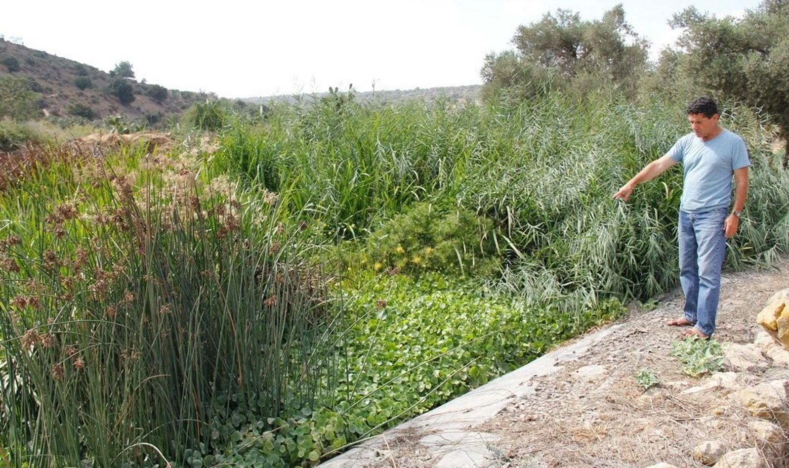 Ayala Water & Ecology CEO Eli Cohen among his plants at Moshav Tzipori. Photo: courtesy